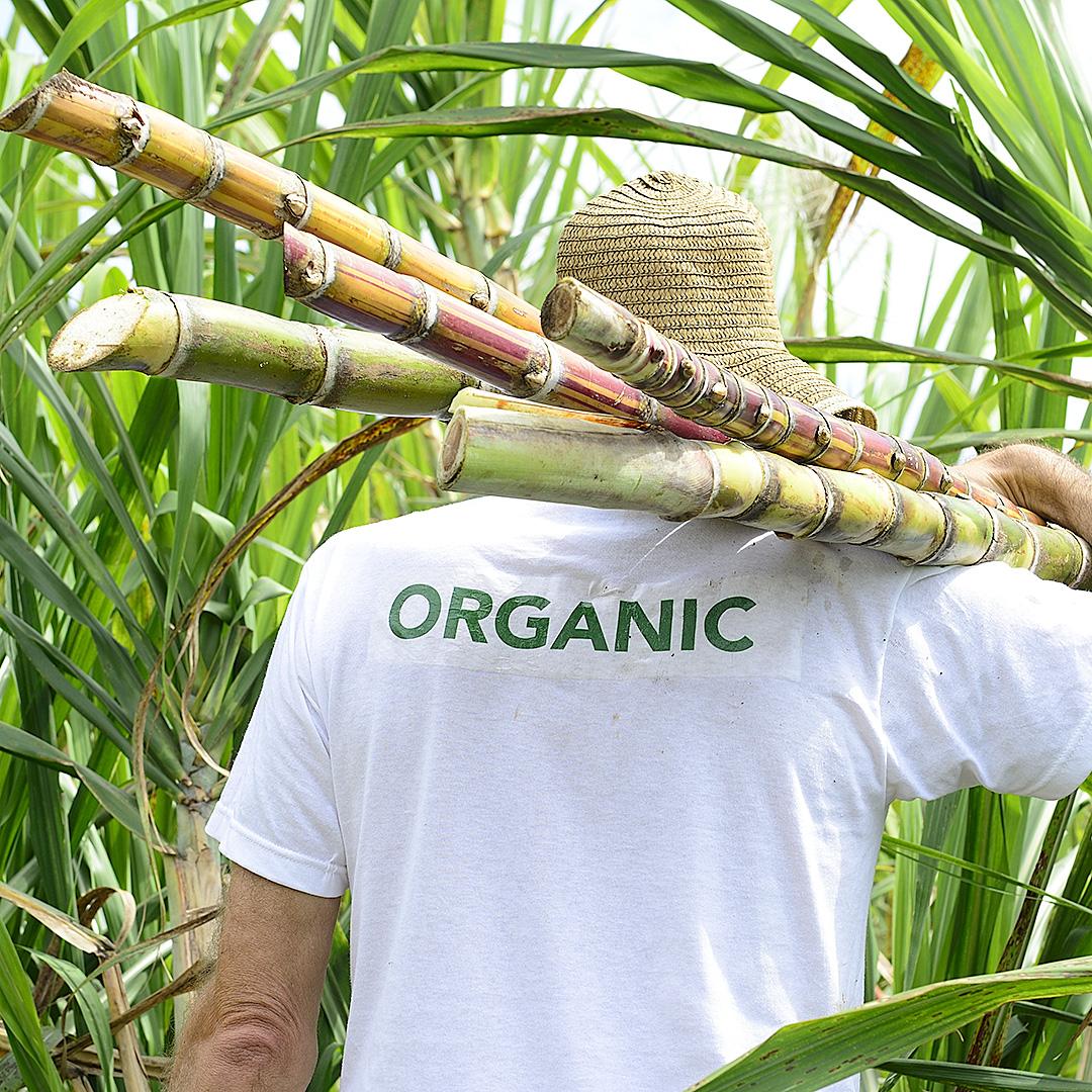Bioplastik aus Zuckerrohr